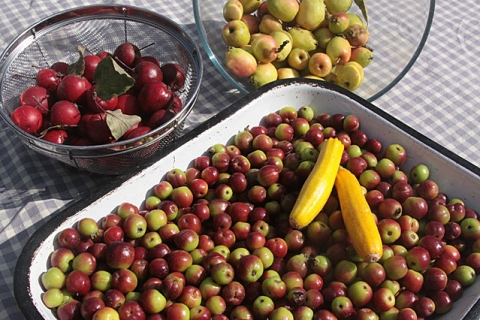 Frisches Obst von der Farm