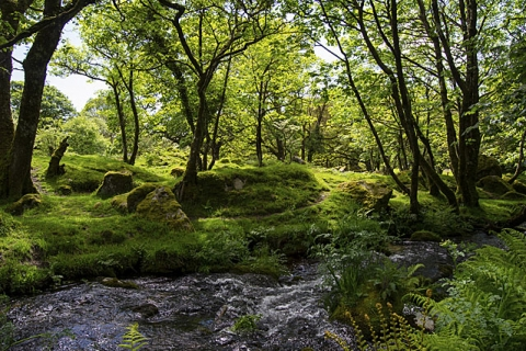 Spaziergang im Dartmoor